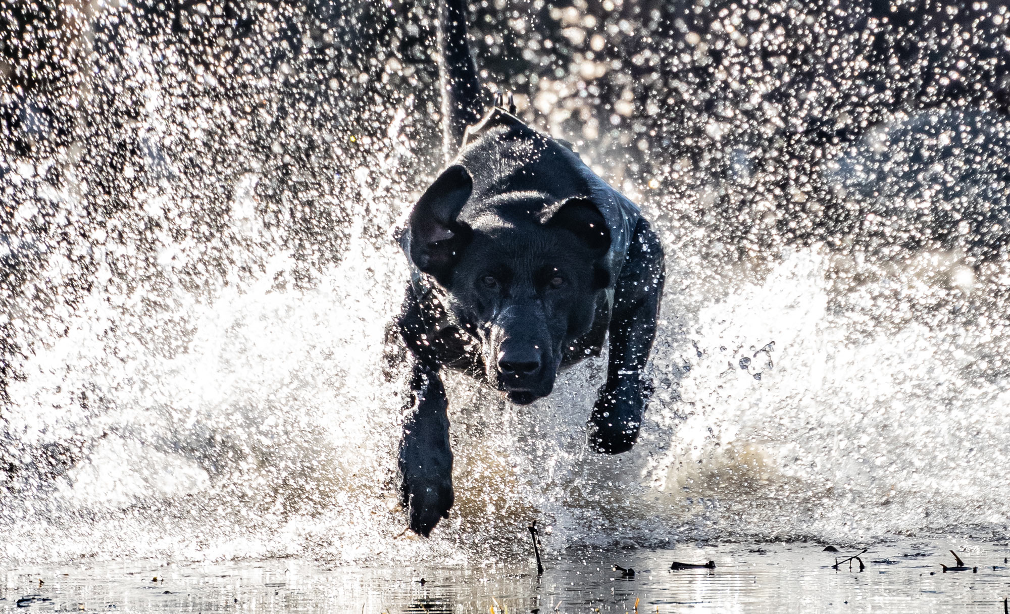 Professional Duck Dog Training Giveaway